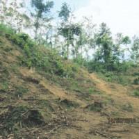 BRI JBR: tanah Gumuk 3 SHM  luas total 7.649m2, Ds.Gambiran,Kec.Kalisat,Jember