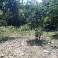 BRI JBR: Tanah pekarangan Luas 2.141, Ds.Balunglor,Kec.balung,Kab.Jember