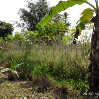 Sebidang Tanah SHM No. 1 Nagari Gadut LT 1.730 M2