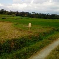 UlaMM Jatisrono (22-10) : Sebidang Tanah sesuai SHM No. 730, terletak di Desa Gunan, Kec. Slogohimo, Kab. Wonogiri, luas 2625 m2