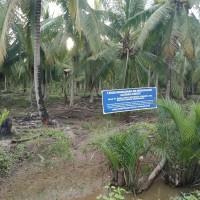 Sebidang tanah seluas 11.039m2 SHM No. 555 di Desa Parit Baru,Selakau,Sambas,KalBar