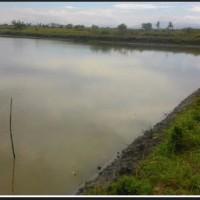 (KSP) tanah empang (SHM No.504) Luas tanah 7.384 m2, di Kel. waetuoe, kec. lanrisang, Kab. Pinrang
