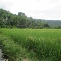 BRI Palopo: Sebidang tanah seluas 3082 m2 SHM 1671/Padang Sappa, terletak di Padang Sappa Kab. Luwu