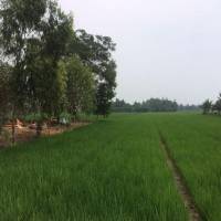Sebidang Tanah Sawah SHM No. 0881 n seluas 3.234m2 yang terletak di Dusun Cikalong Sari Desa Jatiragas Kec Jatisari Kab Karawang