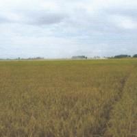 BNI:Tanah pertanian SHM 1693, lt 1.252 m2 di Ds Penambuhan Kec Margorejo Kab Pati