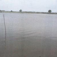 BNI:Tanah tambak SHM 00376 lt. ± 26.280 m2 di Ds Kembang Kec Dukuhseti Kab Pati