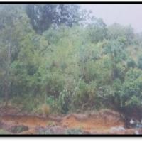 TANAH seluas 3.970 M2 SHM NO. 484 Nagari Koto Tangah Batu Hampa