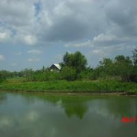 Sebidang tanah luas 10355m2 , SHM No. 58 terletak di Desa Tebanah Kec. Banyuates, Kab. Sampang
