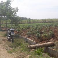 PD BKK Lasem: Tanah SHM No. 00863 luas 3.163 m2, di Desa Purwokerto, Kec. Tayu, Kab. Pati