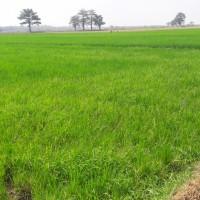 PD BKK Lasem: Tanah SHM No. 645 luas 1.425 m2, di Desa Pecangaan Wetan, Kec. Pecangaan, Kab.Jepara