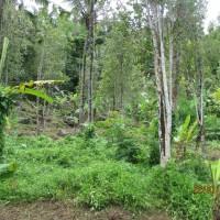 3. Bri Singaraja : 1 (satu) bidang tanah kebun SHM No.03145/1725m² di Desa Sambangan, Kec. Sukasada, Kab. Buleleng,
