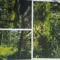 BPR Puspa Kencana: sebidang tanah SHM No.00584 luas 744 m2 berikut sgl sesuatu diatasnya di Desa Balekambang Kec. Selomerto Kab. Wonosobo
