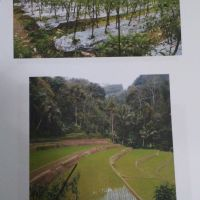 BPR Puspa Kencana: sebidang tanah SHM No.00679 luas 7.447 m2 berikut sgl sesuatu diatasnya di Desa Gondowulan Kec. Kepil Kab. Wonosobo