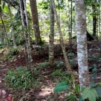 PNM Tasik 5.Satu Paket tanah luas 1112 m2 dan luas 782 m2 di Dsn.Tonggoh, Ds/Kec.Sadananya, Kab.Ciamis