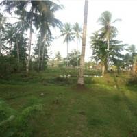 1 bidang tanah kosong SHM No. 994 luas 2.500 m2 di Desa Majaran Kec Salawati Kab Sorong, Prov Papua Barat