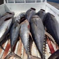 Polairud Malut : 1 (satu) paket Ikan jenis Tuna sebanyak 30 ekor / 1000 kg