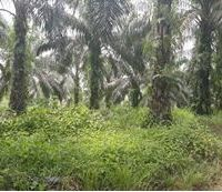 BTPN Lot d, Sebidang Tanah sesuai SHM No.1832, Lt 20.000 m2 terletak di Nagari Koto Padang, Kec. Koto Baru, Kab. Dharmasraya.