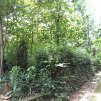 BRI Karanganyar: Tanah pekarangan SHM 339, LT: 1.450 m2 Desa Musuk Kec Sambirejo Kab Sragen