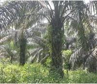 BTPN Lot b, Sebidang Tanah sesuai SHM No.1833, Lt 20.159 m2 terletak di Nagari Koto Padang, Kec. Koto Baru, Kab. Dharmasraya