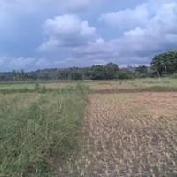 Tanah Sawah seluas 2577 m2, SHM 293, di Desa Balumbungan, Kec Bontoramba, Kab Jeneponto  (BRI Jeneponto)