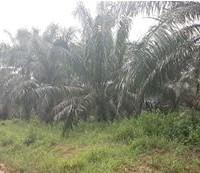 BTPN Lot h, Sebidang Tanah sesuai SHM No.1836, Lt 19.823 m2 terletak di Nagari Koto Padang, Kec. Koto Baru, Kab. Dharmasraya.