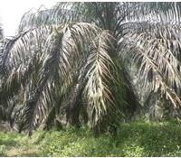 BTPN Lot k, Sebidang Tanah sesuai SHM No.1850, Lt 15.405 terletak di Nagari Koto Padang, Kec. Koto Baru, Kab. Dharmasraya