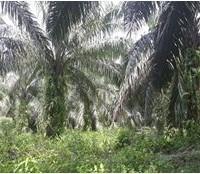 BTPN Lot j, Sebidang Tanah sesuai SHM No.1835, Lt 20.095 m2 terletak di Nagari Koto Padang, Kec. Koto Baru, Kab. Dharmasraya
