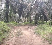BTPN Lot i, Sebidang Tanah sesuai SHM No.1834, Lt 18.659 m2 terletak di Nagari Koto Padang, Kec. Koto baru, Kab. Dharmasraya