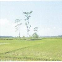 BPD Kbm: Sebidang tanah, SHM No.00863 luas 645 m², berikut segala sesuatu di atasnya, terletak di Desa/Kec. Petanahan, Kebumen