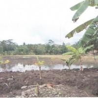 BPD Kbm: Sebidang tanah, SHM No.621 luas 1.453 m², berikut segala sesuatu di atasnya, terletak di Desa Jatimulyo, Alian, Kebumen