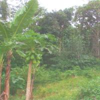 • 1 (satu) bidang tanah, SHM No. 363 luas 2.529 m2 di Desa Bojongmanik, Kec. Bojongmanik, Kab. Lebak