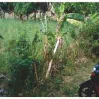 (BRI Rembang) 4 a. Sebidang tanah di Ds. Ketangi, Pamotan Rembang