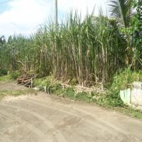 Tanah SHM No.1129, luas 2.504 m2, Ds. Kampung Baru, Kec. Kepung, Kab. Kediri