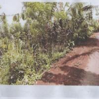 BPR Kanaya (26-04)2a : Sebidang Tanah sesuai SHM No. 01026 luas 5430 m2 terletak di Ds. Umejero, Kec. Busungbiu, Kab. Buleleng