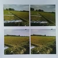 Bank Jatim Pare - Tanah pertanian terletak di Desa Tugu Kecamatan Purwoasri Kabupaten Kediri - Jawa Timur