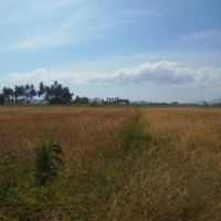 Lelang Eksekusi Hak Tanggungan PT BNI (Persero) Tbk. Cabang Bima berupa Tanah Kosong seluas 5.200 di Desa Rasabou, Kec. Sape, Kab. Bima