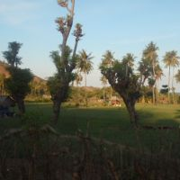 Lelang Eksekusi Hak Tanggungan PT BNI (Persero) Tbk. Cabang Bima berupa Tanah Kosong seluas 12.600 m2 di Desa Poja, Kec. Sape, Kab. Bima