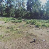 Mandiri Taspen (19-06)4a : Sebidang Tanah sesuai SHM No. 2728 luas 200 m2 terletak di Ds. Tegal Bedeng Barat, Kec. Negara, Kab. Jembrana