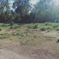 Mandiri Taspen (19-06)4b : Sebidang Tanah sesuai SHM No. 2729 luas 200 m2 terletak di Ds. Tegal Bedeng Barat, Kec. Negara, Kab. Jembrana