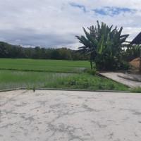 (BRI Sinjai) tanah (SHM No.1225), Luas tanah 1.524 m2, di Desa Biru, Kec. Kahu, Kab. Bone