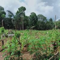 KSP Sahabat Mitra Sejati: 3b. Tanah seluas 579 m2, SHM No.08 di Kel. Hutaraja, Kec. Muara Batang Toru, Kab. Tapanuli Selatan