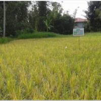 [PNM] 5. Sebidang Tanah Pertanian seluas 1.023 M²  SHM No. 00947, di Jorong Tanjung Alam Nagari Biaro Gadang Kec Ampek Angkek  Kab Agam