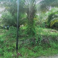 KSP Sahabat Mitra Sejati: 3a. Tanah seluas 300 m2, SHM No.05 di Kel. Hutaraja, Kec. Muara Batang Toru, Kab. Tapanuli Selatan