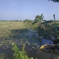 PT BRI Demak : Tanah SHM No. 334  luas 2.608 m2, di Desa Sidorejo, Kec. Sayung, Kab. Demak
