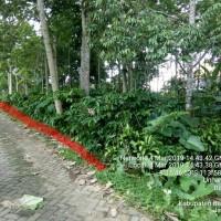 Koperasi MILAN Genteng: Sebidang tanah luas 1.329m2 terletak di Desa Banyuanyar, Kecamatan Kalibaru, Kabupaten Banyuwangi