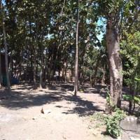tanah  SHM No. 49, luas 935 m2, terletak di Desa Pakuncen, Kecamatan Patianrowo, Kabupaten Nganjuk