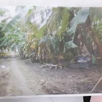 BRI Majenang: Sebidang tanah, SHM No. 1652 luas 2.886 m², berikut bangunan di Desa Rawaapu Kecamatan Patimuan Kabupaten Cilacap