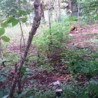 BPR MMM: Sebidang tanah, SHGB No.01451/Balecatur luas 64M2,  terletak di Desa/Kel.Balecatur, Kec.Gamping,Kab.Sleman,Prov. DIY