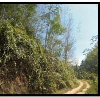 BSM (1d) T/B sesuai SHMNo.302, LT 80.000m2 terletak di Nagari Silago  Kec. IX Koto, Kab. Dharmasraya