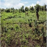 1 bidang tanah kosong luas 10.000 m2 di Desa Sempan Barat, Kecamatan Mimika Timur, Kabupaten Mimika